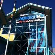 Plan Your Visit To The Gatlinburg Tennessee Aquarium