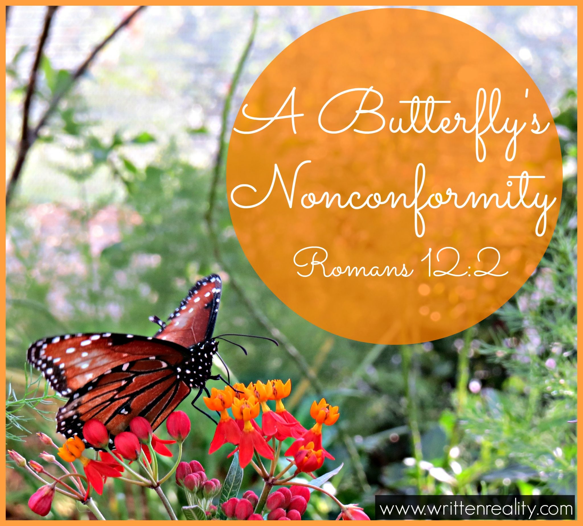 butterfly's nonconformity
