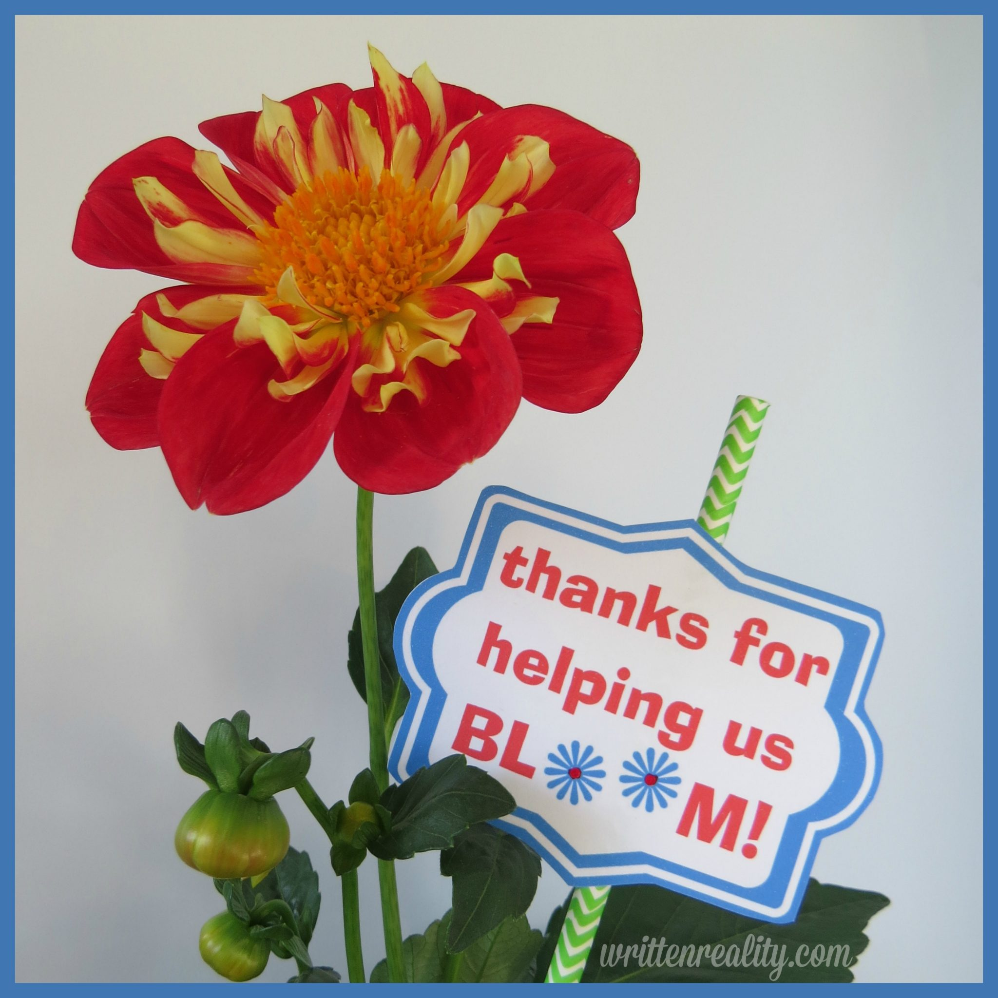 photograph relating to Thanks for Helping Me Bloom Printable referred to as Conclude of the 12 months Trainer Presents - Penned Truth of the matter
