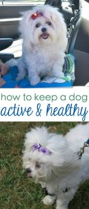 How Keep Your Dog Active and Healthy